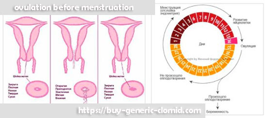 ovulation before menstruation